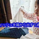 ティッシュを箱から出す1歳児