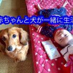 赤ちゃんと犬が一緒に生活